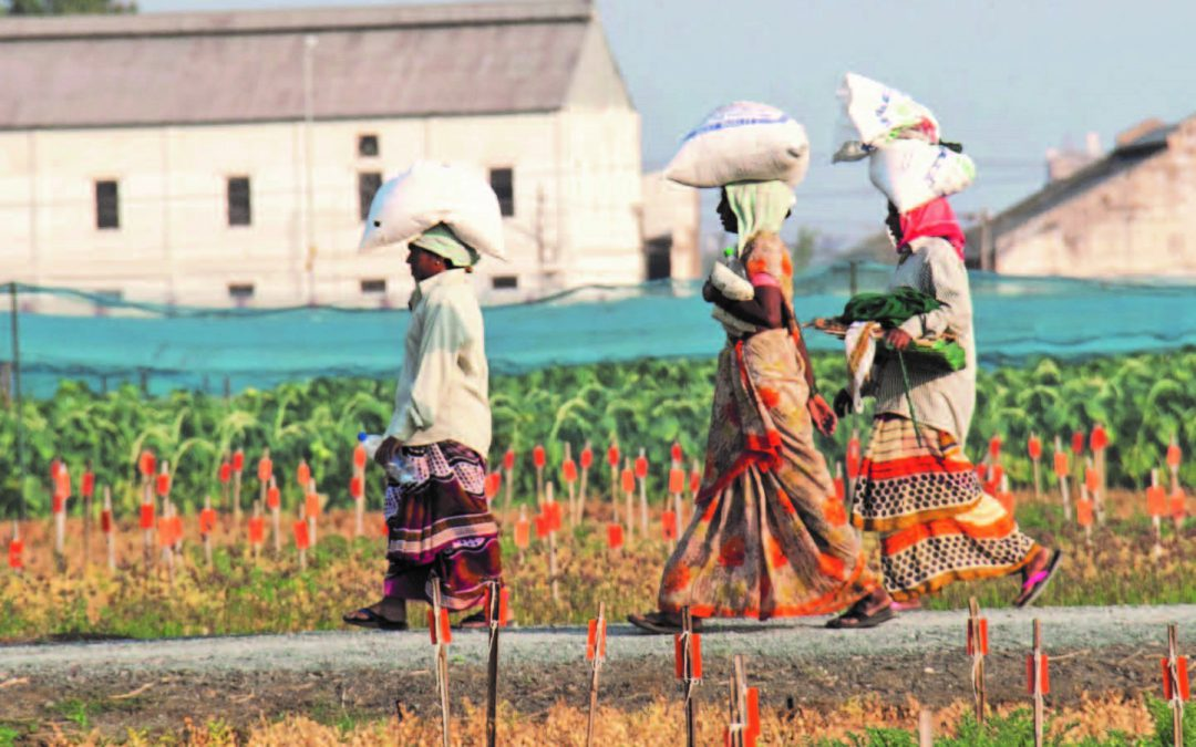 What can international agricultural research for development learn from the Andhra Pradesh chickpea revolution?