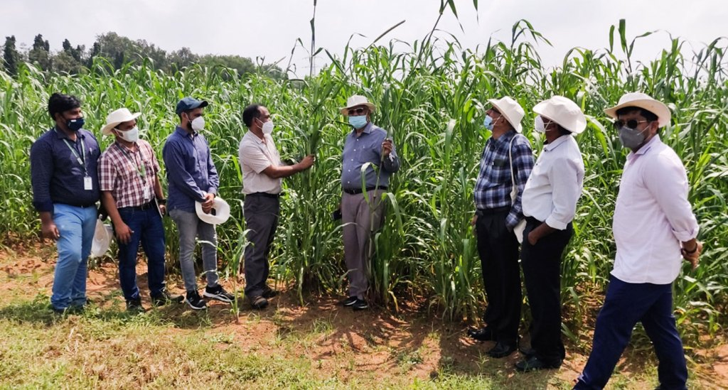 Young farm entrepreneurs look at high-biomass sorghum and pearl millet for biofuel feedstock