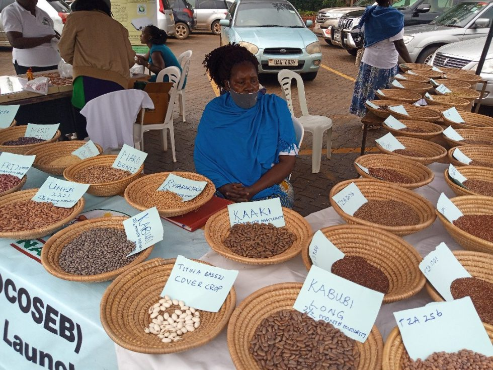 Hoima community seed bank showcasing bean diversity during the Indigenous food and seed fair in Kampala Uganda. Credit: T.Recha/Alliance of Bioversity and CIAT